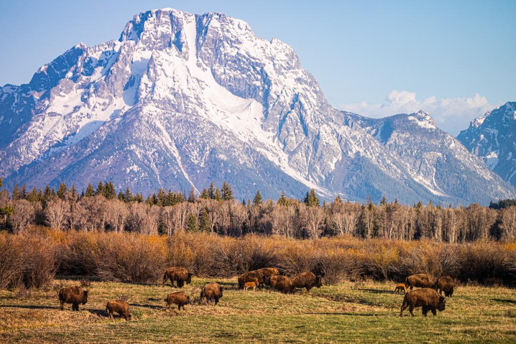P493 Jack Borowiak, Wyoming USA